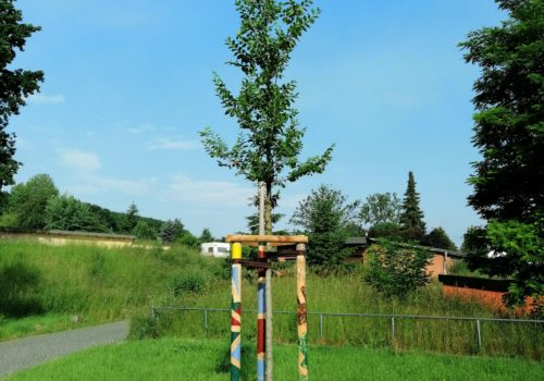 100 Bäume für Freital, Foto Umweltzentrum Freital e.V.